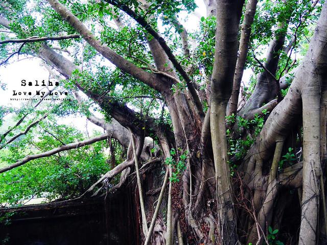 台南一日遊景點推薦安平樹屋安平老街 (33)