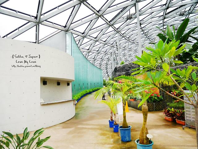 日本東京景點新宿御苑溫室植物 (30)