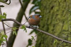 Birdwatching In Kangra Valley And Dhauladhar Hills, Dharamshala