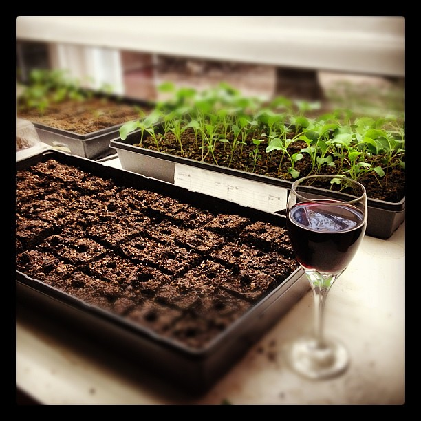 Having a glass of wine while I plant the next batch of seeds.