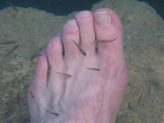 A foot with fish