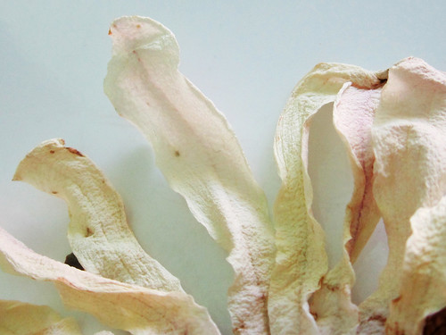 Dried White Flower