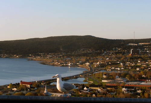 Carbonear Spring Morning