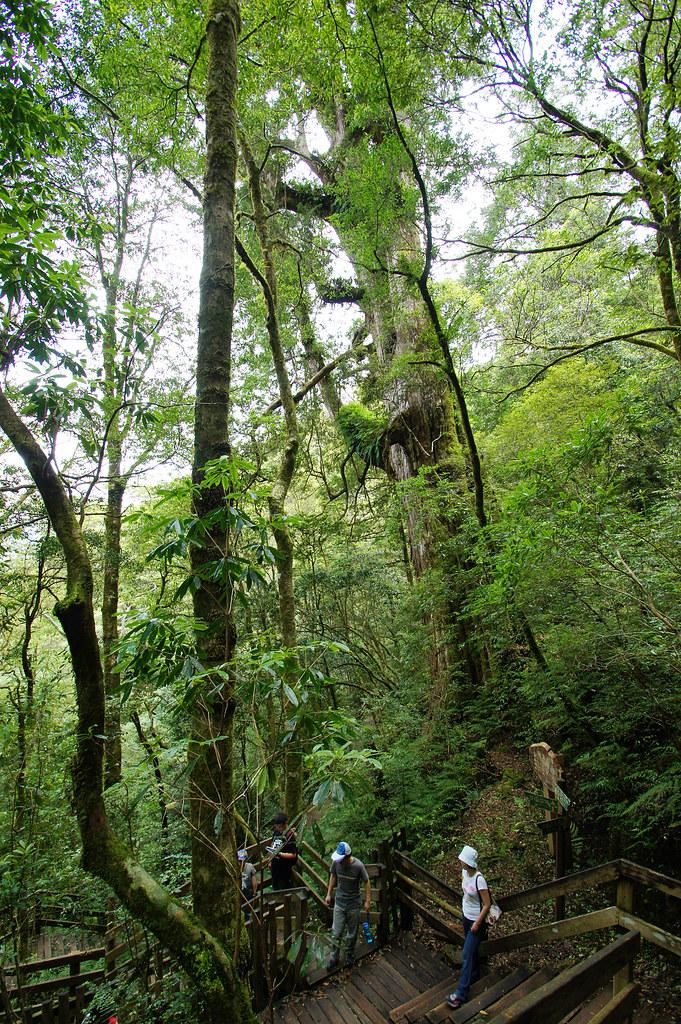 巨木群,與往拉拉山的路上-051