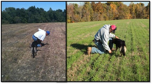 Left: Larry Woods checking for growth a few weeks after the first field seeding this summer. Right: Larry in the same field just a few months later.