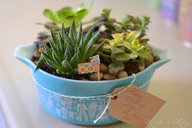 Gift Pyrex & Succulents