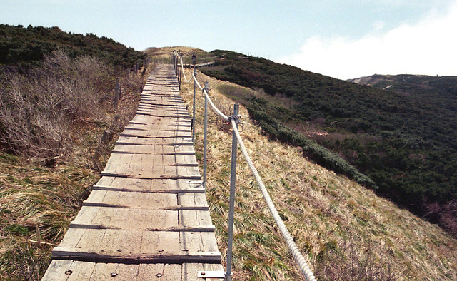 架高的木棧道保護植被