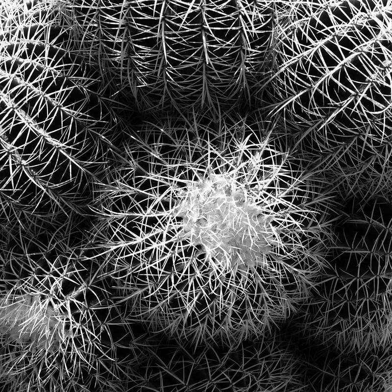 Cactus at the Huntington Desert Garden