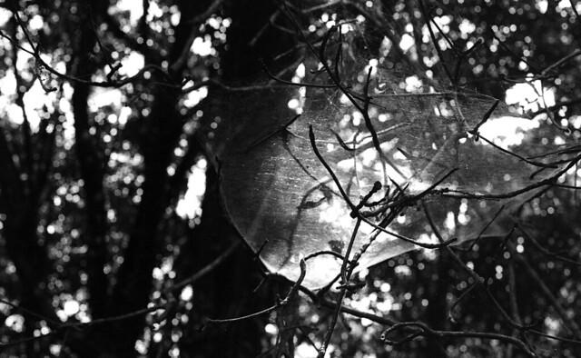 白色蛛蛛網