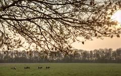 2011 04 21 Schokland