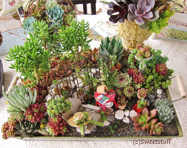 Fairy garden by The Succulent Perch