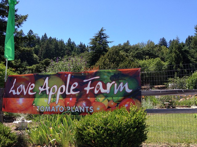 Love Apple Farm Tomato Plants