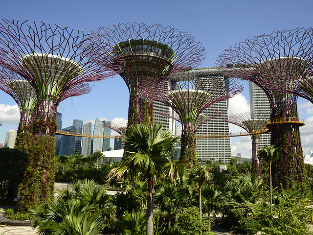 supertrees and ocbc skyway with marina bay sands at the background - Garden By The Bay Marina Bay Sands