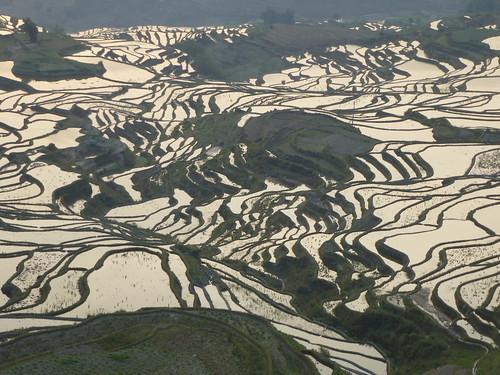 Yunnan13-Yuanyang 1-Duoyishu (54)
