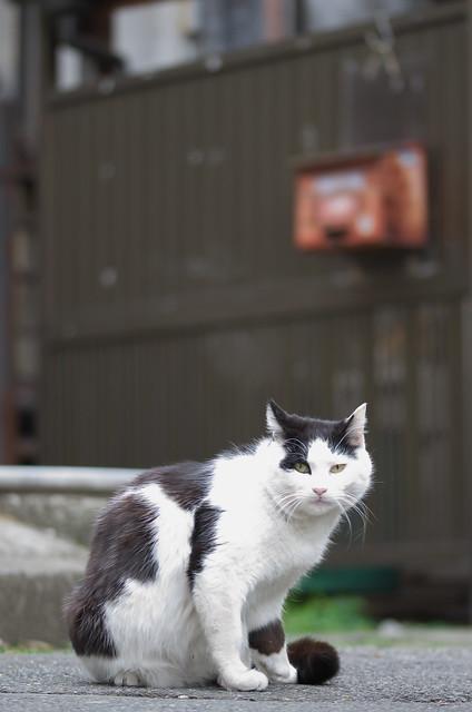 東京路地裏散歩 谷中のネコ 2014年4月20日