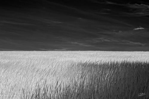 Linie-Infrared.jpg