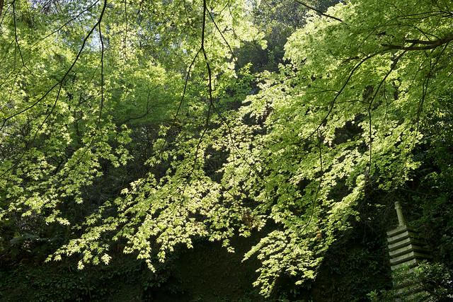 鎌倉 東慶寺 Kamakura Tokeiji