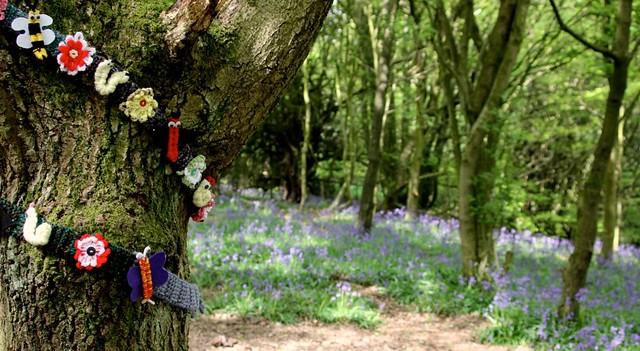 looking at bluebells