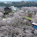 春城何處不飛花  ~  Kakuzankan (鶴山館). surrounded by sakura cherry blossoms @ Tsuyama , Okayama 津山城城跡  ~