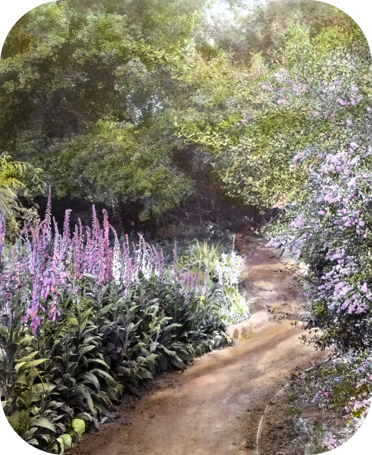Michael Cochrane Armour house, 962 Linda Vista Avenue, Pasadena, California. Native plant garden pathway