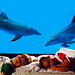 [花蓮] 花蓮海洋公園│周邊景點吃喝玩樂懶人包 (4)