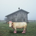 Cow2 by iblushay : Thank you for visiting and the faves