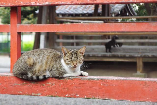 Today's Cat@2016-10-22