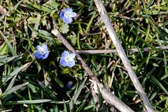 North Carolina Arboritum