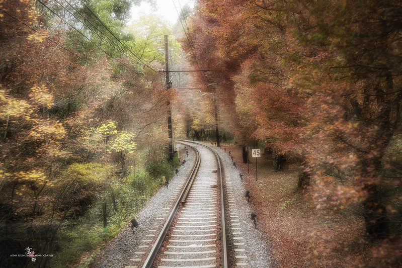 京都 楓葉隧道
