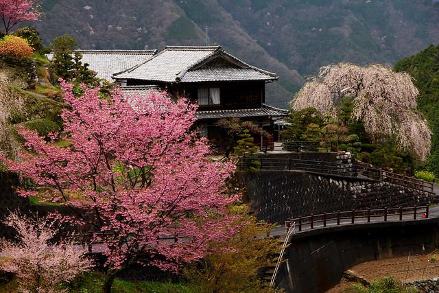Hyotan Sakura_21