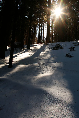 california sun snow sequoianationalpark march2012