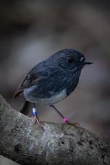 wren(0.0), cinclidae(0.0), junco(0.0), emberizidae(0.0), animal(1.0), nature(1.0), fauna(1.0), close-up(1.0), blue(1.0), beak(1.0), blackbird(1.0), bird(1.0), wildlife(1.0),