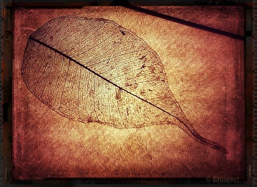 331/365- Leaf Skeleton by elineart