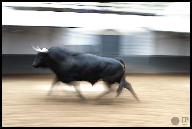 toro-de-Guardiola-Fantoni-