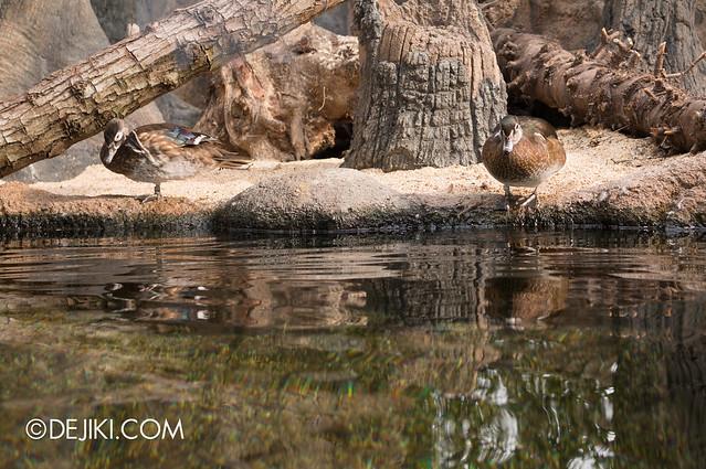 River Safari - Mississippi River 6