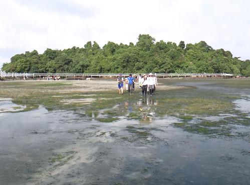 TeamSeagrass field training Chek Jawa June 2013
