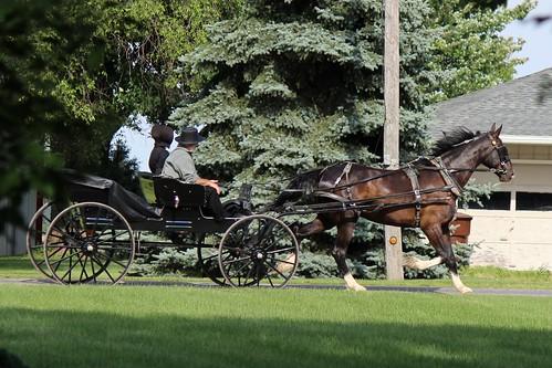IMG_0169_Amish_Buggy
