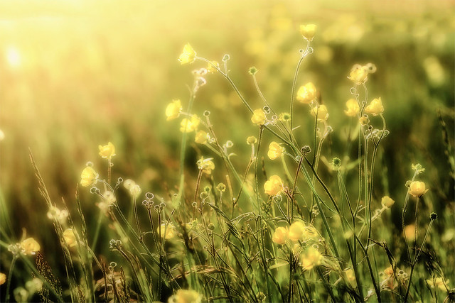 Kleine gele bloempjes