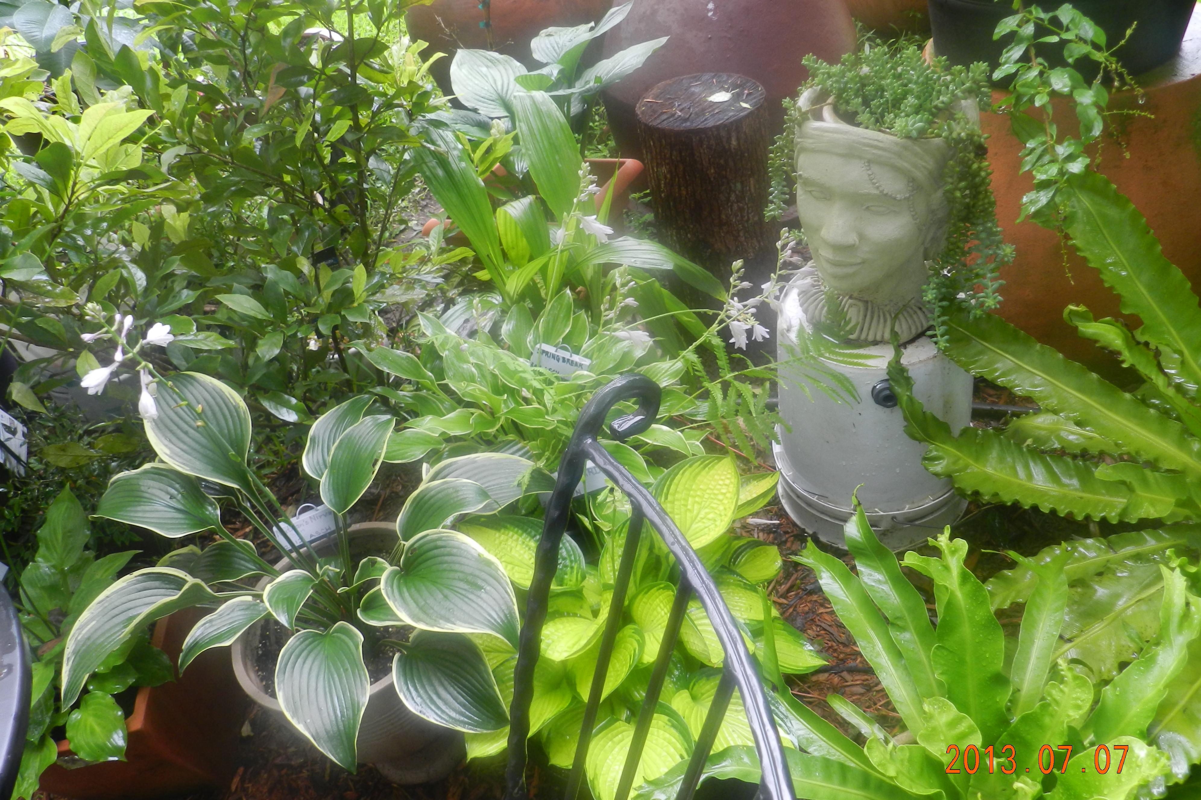 Garden13July0179