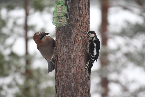 bird nature canonefs55250f456is