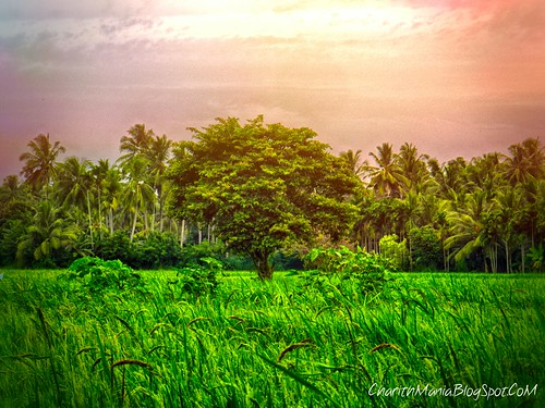 Sri Lanka Village by CharithMania