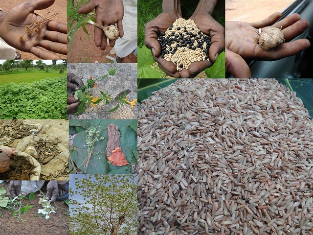 Indigenous Medicinal Rice Formulations For Kidney Heart