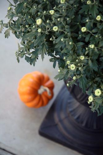 Close-up-of-Mum-and-pumpkin-faded