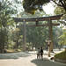 Green Spring at Meiji Shrine