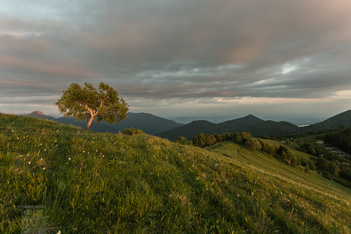 light sunset italy tree italia tramonto hills albero luce colline sormano