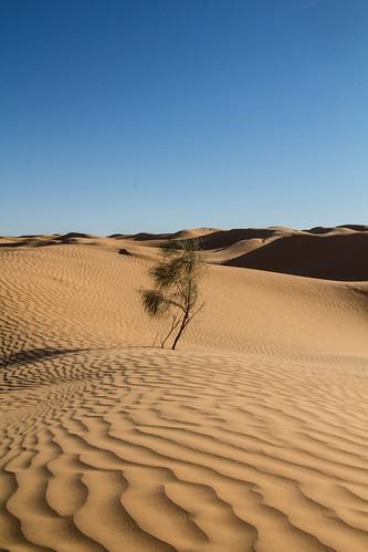 africa plant green sahara landscape sand desert offroad tunisia outdoor wildlife dune tunesia adventure westsahara