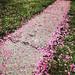 pink path-005 by swardraws