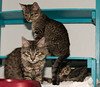 Kittens of Colony Room A (1)