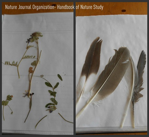 Nature Journal - Sheet Protectors