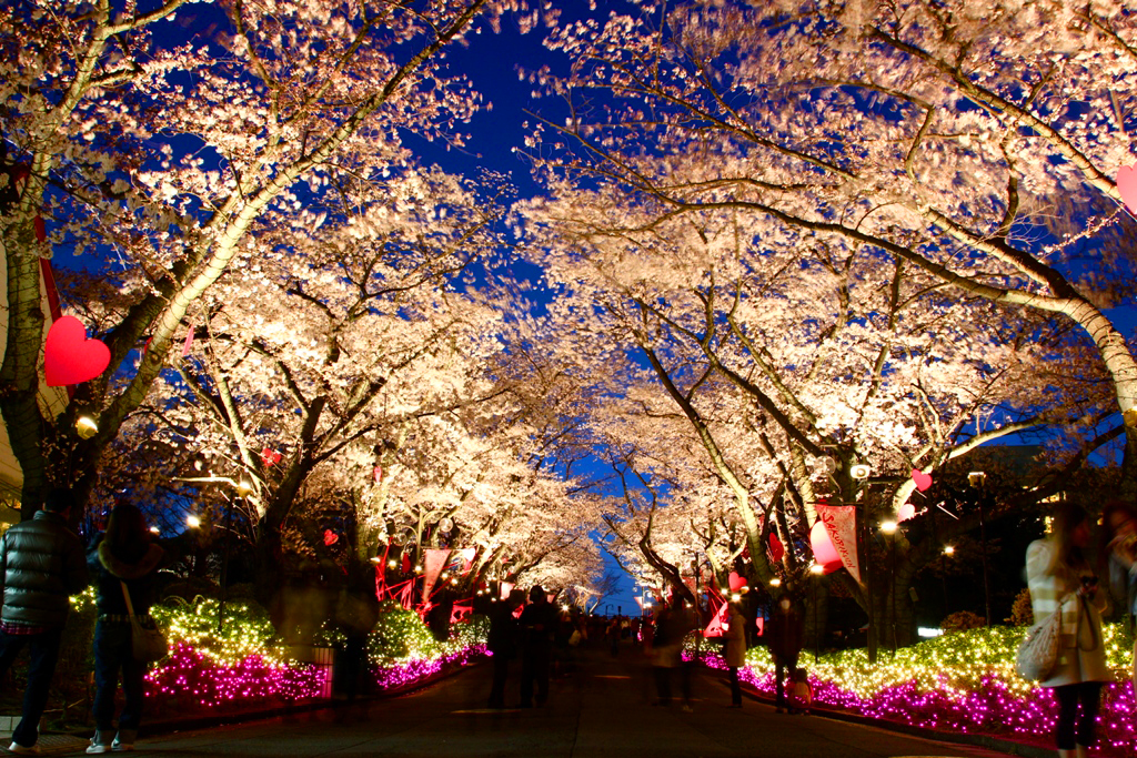 Image result for yomiuri land sakura